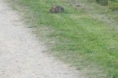 Furry visiter